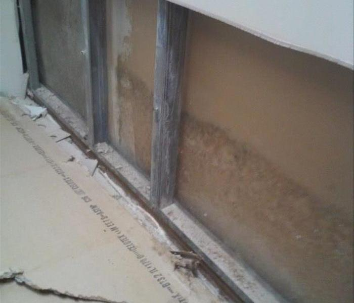 Mold Problem In Cooper City Home